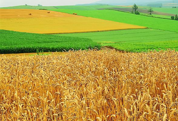 Юридические особенности приобретения сельскохозяйственных земель