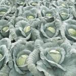 В России законодательно могут быть установлены максимальные цены на некоторые продукты питания