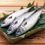 Рыболовецкие компании получат льготы при вылове рыбы, если будут приобретать отечественные суда